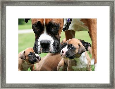 Boxer Mommy Watch Over Pups  Framed Print by Renae Laughner