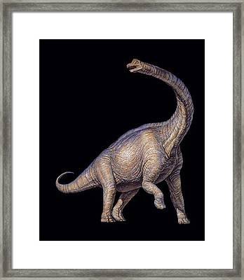 Brachiosaurus Dinosaur Framed Print by Joe Tucciarone