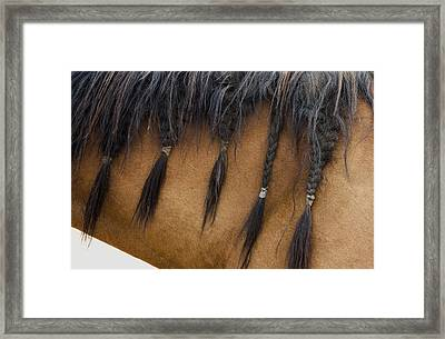 Framed Print featuring the photograph Braided Boy by Lorraine Devon Wilke