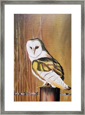 Bran Owl Framed Print by Usha Rai