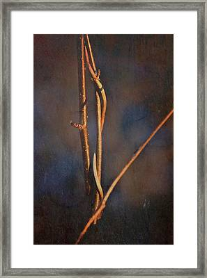 Branch Abstraction Framed Print by Odd Jeppesen