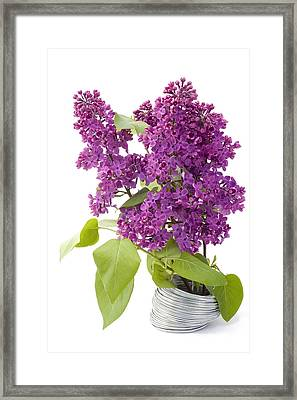 Framed Print featuring the photograph Branch Of A Lilac And Wire by Aleksandr Volkov