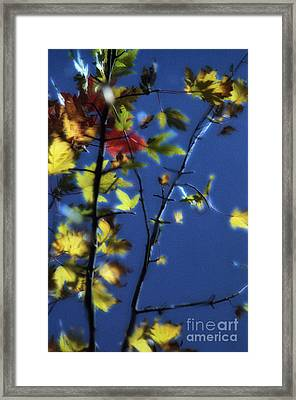 Branch Reflection Framed Print
