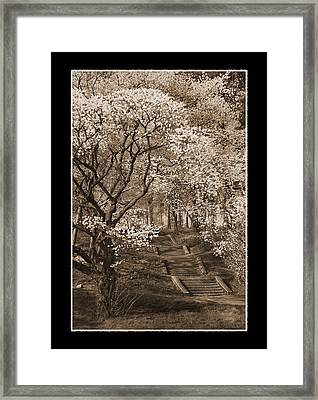 Branchbrook Park In Sepia Framed Print