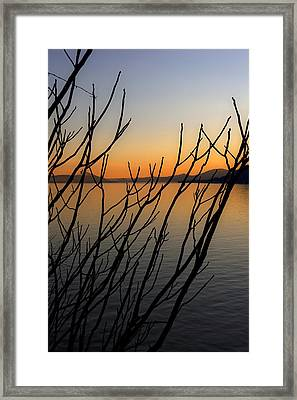 Branches In The Sunset Framed Print by Joana Kruse