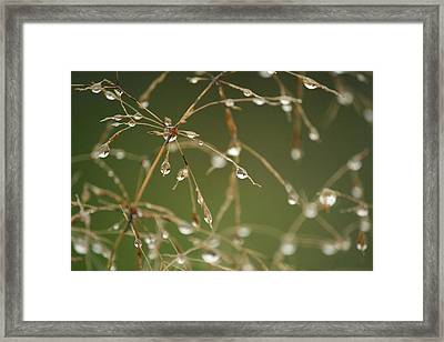 Branches Of Dew Framed Print by Neal Eslinger