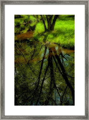 Branches Of Life Reflects Framed Print by Karol Livote