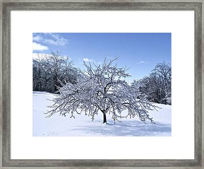 Branches Of Rooted Wisdom Framed Print by Rotaunja