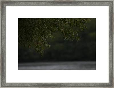 Branches Over Water Framed Print by Static Studios