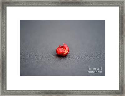 Brazilizn Pepper Berry Framed Print by Lynda Dawson-Youngclaus