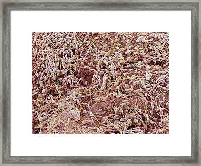 Bread Mould Framed Print