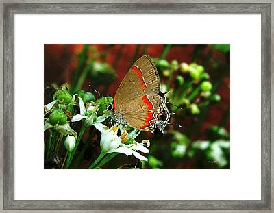 Framed Print featuring the photograph Breakfast At The Gardens by George Bostian