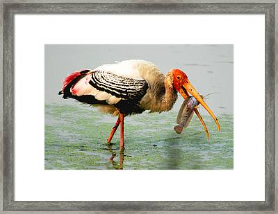 Framed Print featuring the photograph Breakfast by Pravine Chester