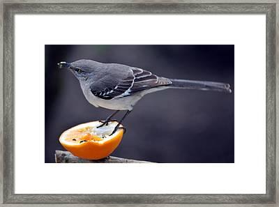 Breakfast Framed Print by Skip Willits