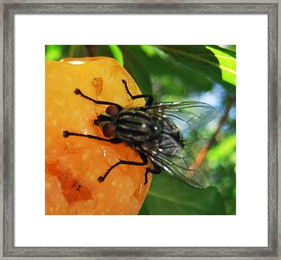 Breakfast Time Framed Print by Eric Kempson