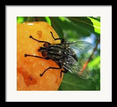 Insect Butterflies Of Lesvos Framed Prints