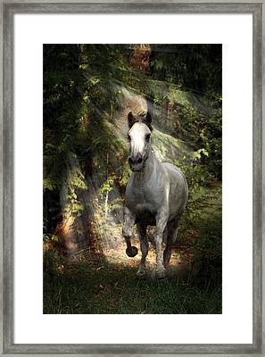 Breaking Dawn Gallop Framed Print by Wes and Dotty Weber