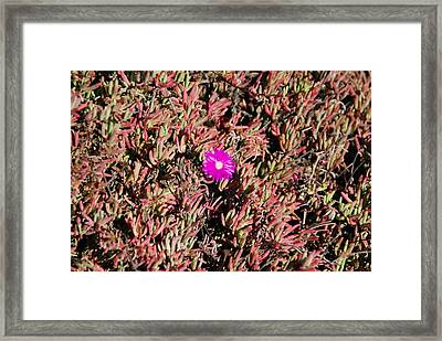 Breaking New Ground Framed Print