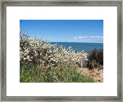 Framed Print featuring the photograph Brewster Beach by Robin Regan
