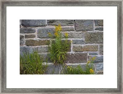 Brick Wall Flowers Framed Print by Michel DesRoches
