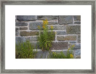 Brick Wall Flowers Framed Print