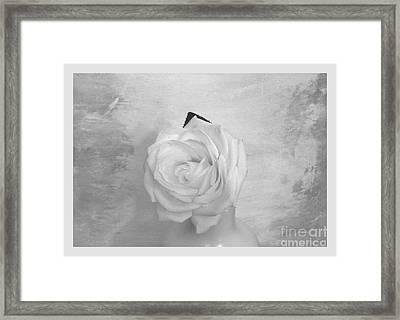 Bridal White Rose Framed Print by Marsha Heiken