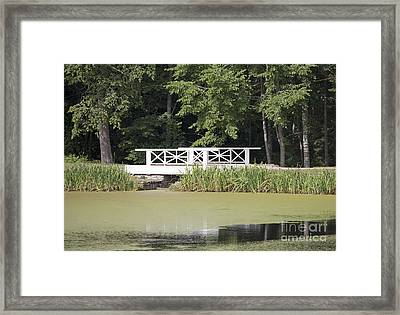 Bridge Over An Algae Covered Pond Framed Print by Jaak Nilson