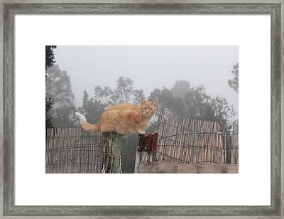 Bridging Cat Framed Print