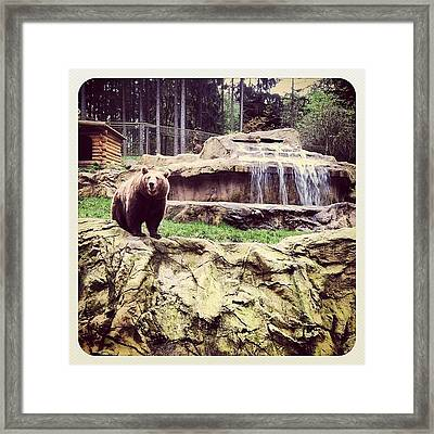 Bärig... #bär #bear #waterfall #epic Framed Print