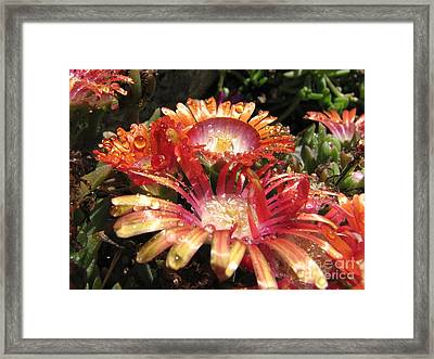Bright And Beautiful Framed Print by Michelle H