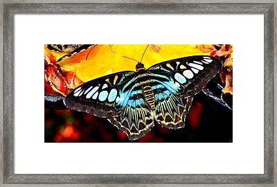 Framed Print featuring the photograph Bright And Blue by Rima Biswas