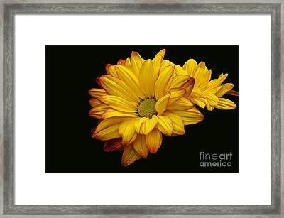 Bright And Brassy Framed Print