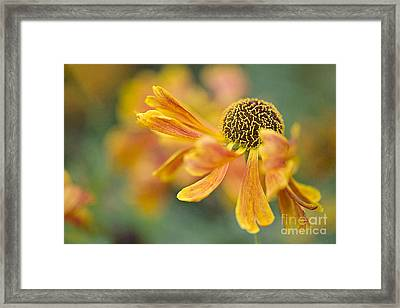 Bright And Breezy  Framed Print