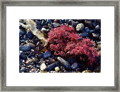 Bright Beach Life Framed Print by Anna Bree