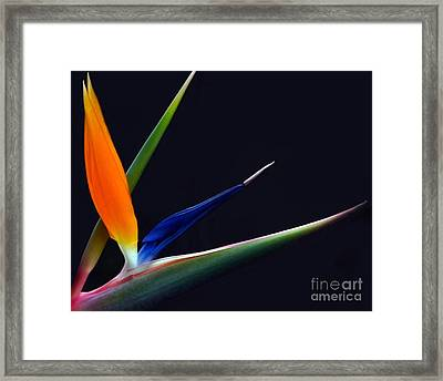 Bright Bird Of Paradise Rectangle Frame Framed Print