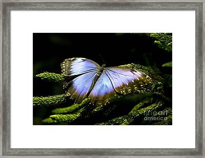 Bright Blue  Framed Print by Leslie Leda