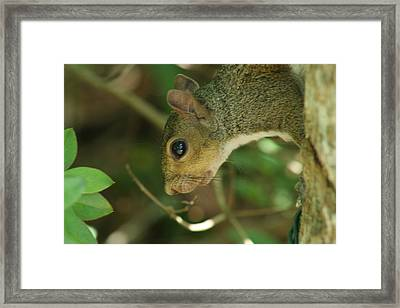 Bright Eyes Framed Print by Sean Green