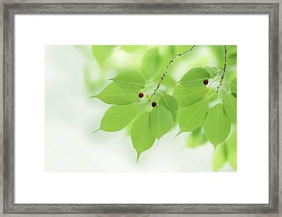 Bright Green Leaves Framed Print by Imagewerks