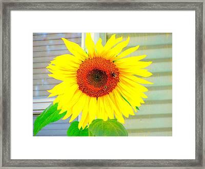 Bright Happy Sunflower Face Framed Print by Amy Bradley