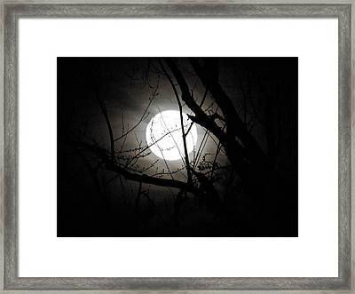 Bright Night Framed Print by Gloria Warren