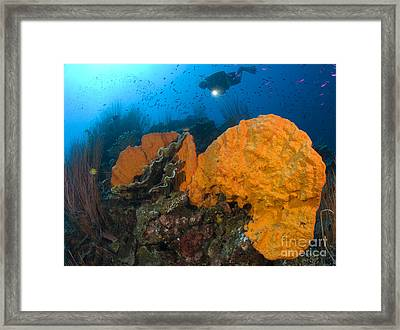Bright Orange Sponge With Diver Framed Print by Steve Jones