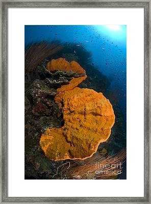 Bright Orange Sponge With Sunburst Framed Print by Steve Jones