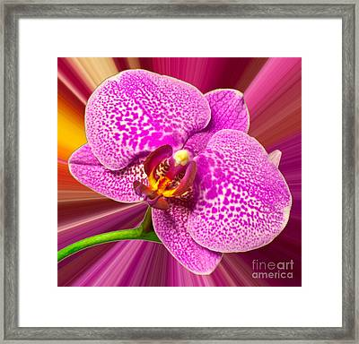 Framed Print featuring the photograph Bright Orchid by Michael Waters