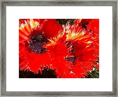 Bright Red Framed Print by Ken Riddle