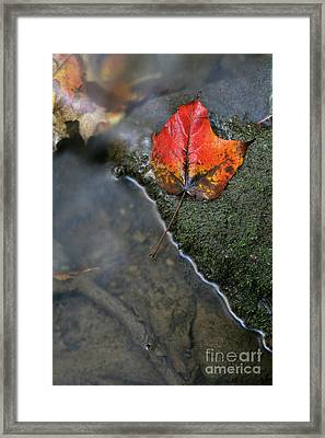 Bright Red Leaf Near A Stream Framed Print by Chris Hill
