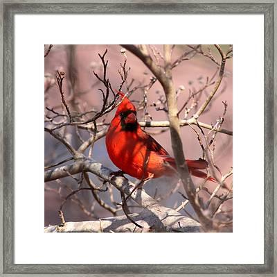 Bright Red Framed Print
