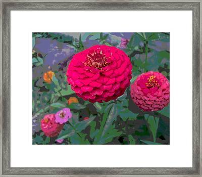 Bright Red Zinnia Flower Framed Print by Padre Art