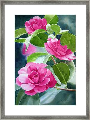 Bright Rose-colored Camellias Framed Print by Sharon Freeman