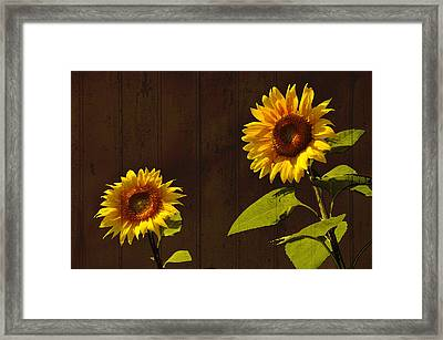 Framed Print featuring the photograph Bright Sunflower Pair by Nancy De Flon