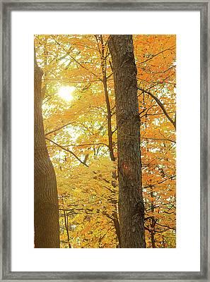 Bright Yellow Framed Print by Scott Hovind